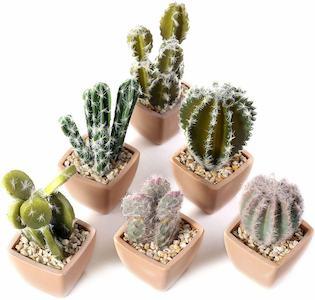 cactus plastico