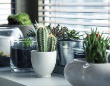 decorar con plantas el salon